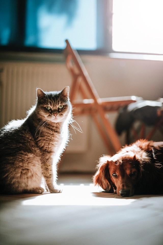 4 Things Every Pet Owner Should Know