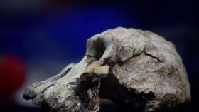 TOPSHOT-ETHIOPIA-SCIENCE-EVOLUTION-ARCHAEOLOGY